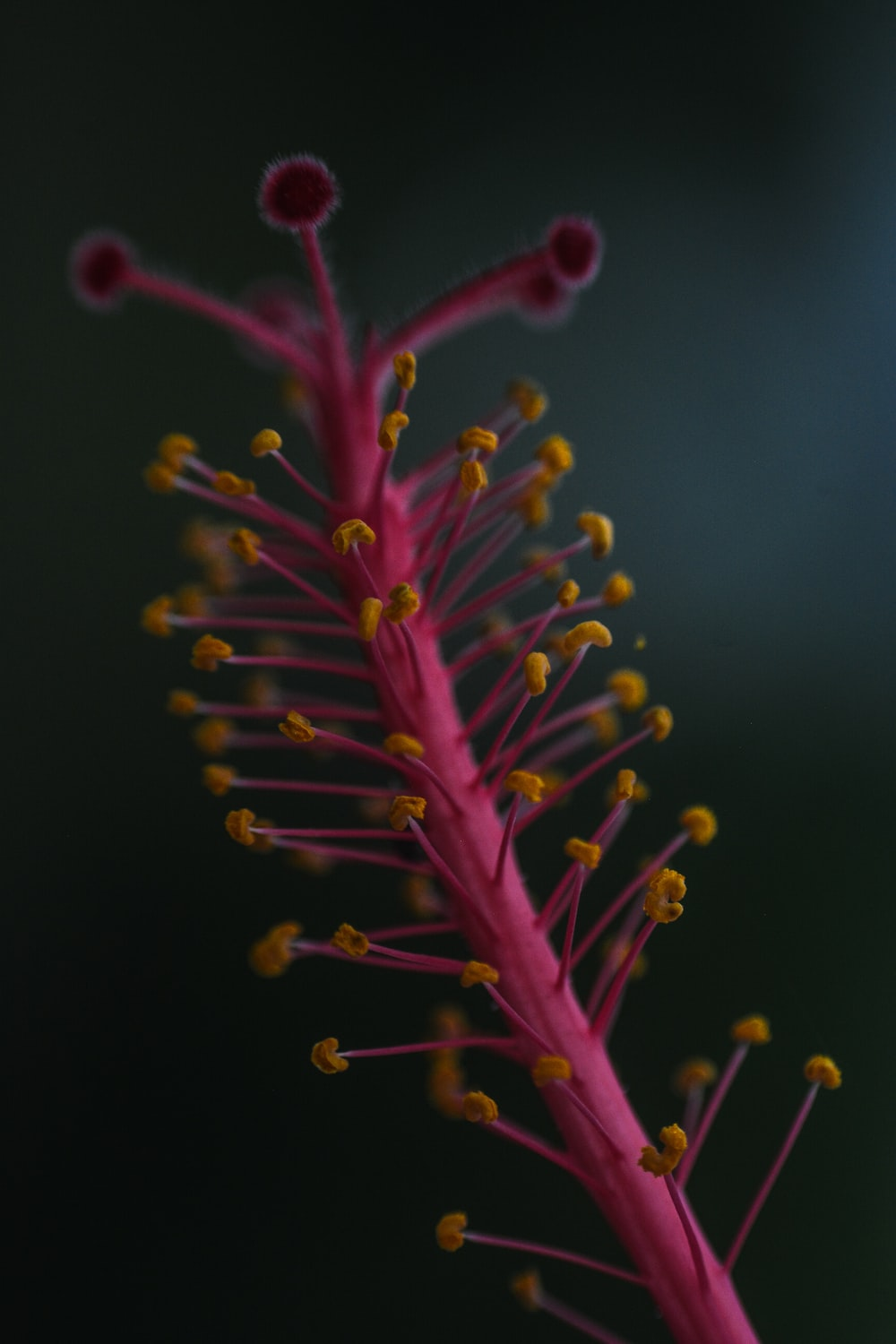 yellow and red plant in close up photography