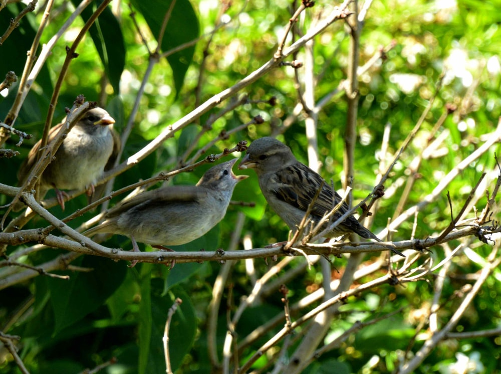 brown and gray bird on tree branch during daytime