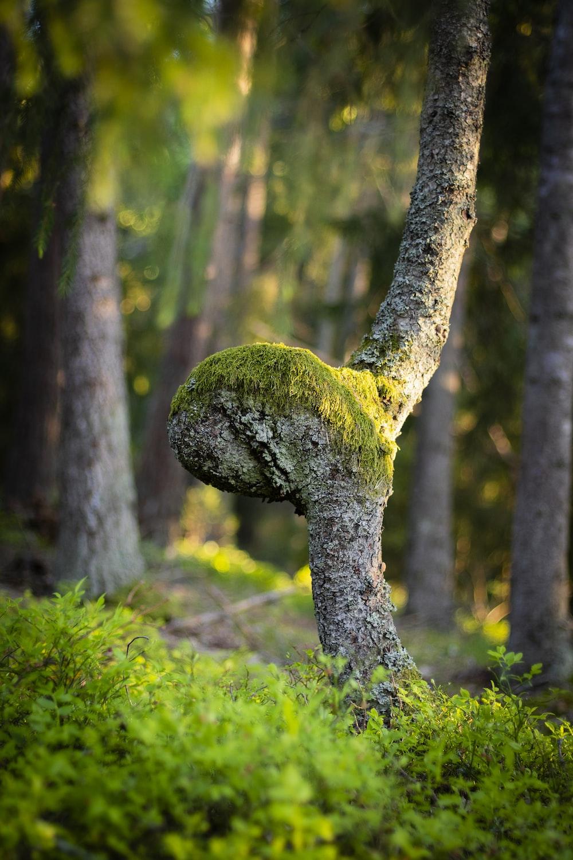 green moss on gray tree trunk