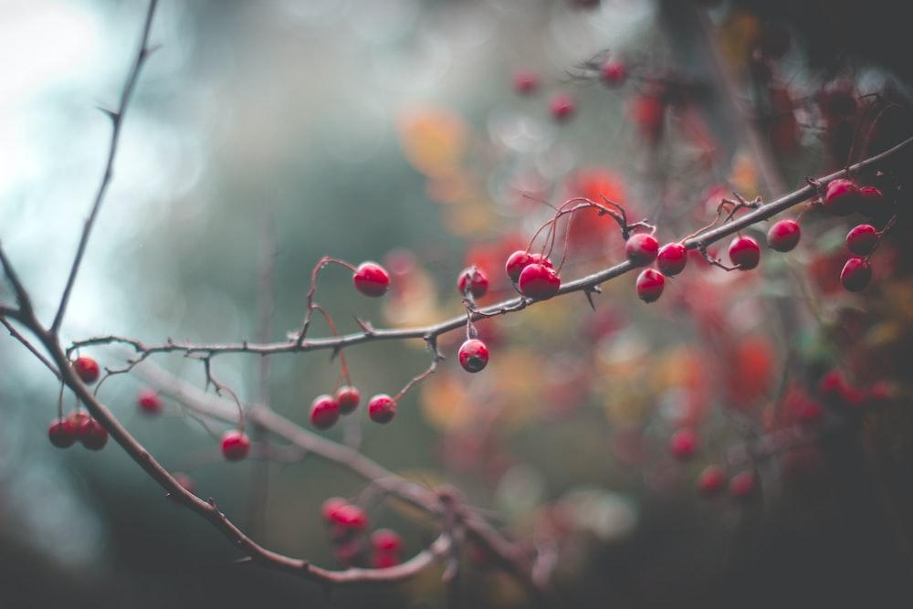red and green plant in tilt shift lens