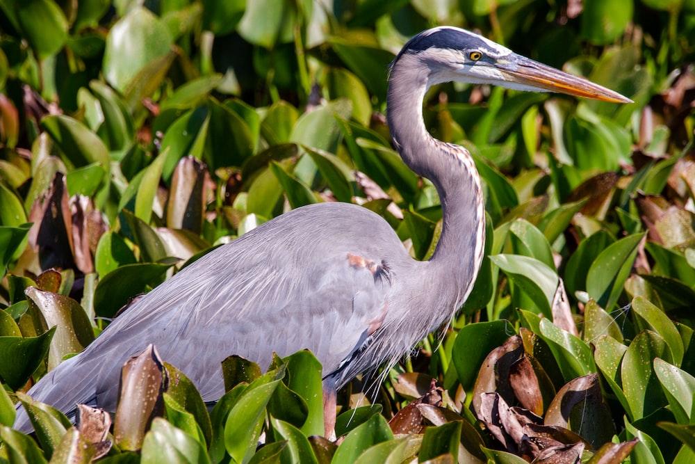 grey bird on green plant