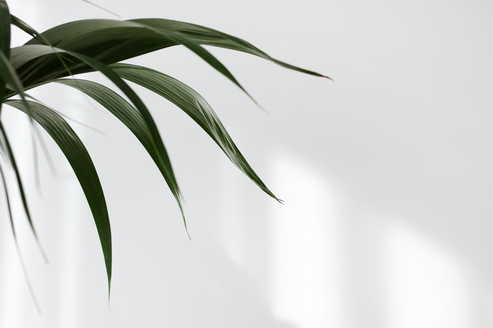 green plant beside white wall
