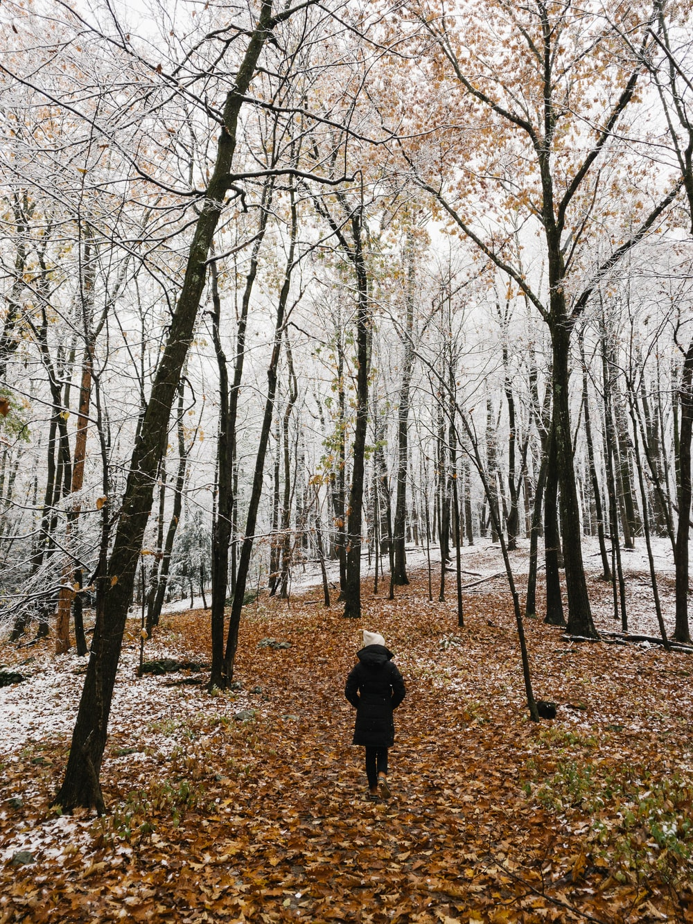 person in black jacket walking on forest during daytime