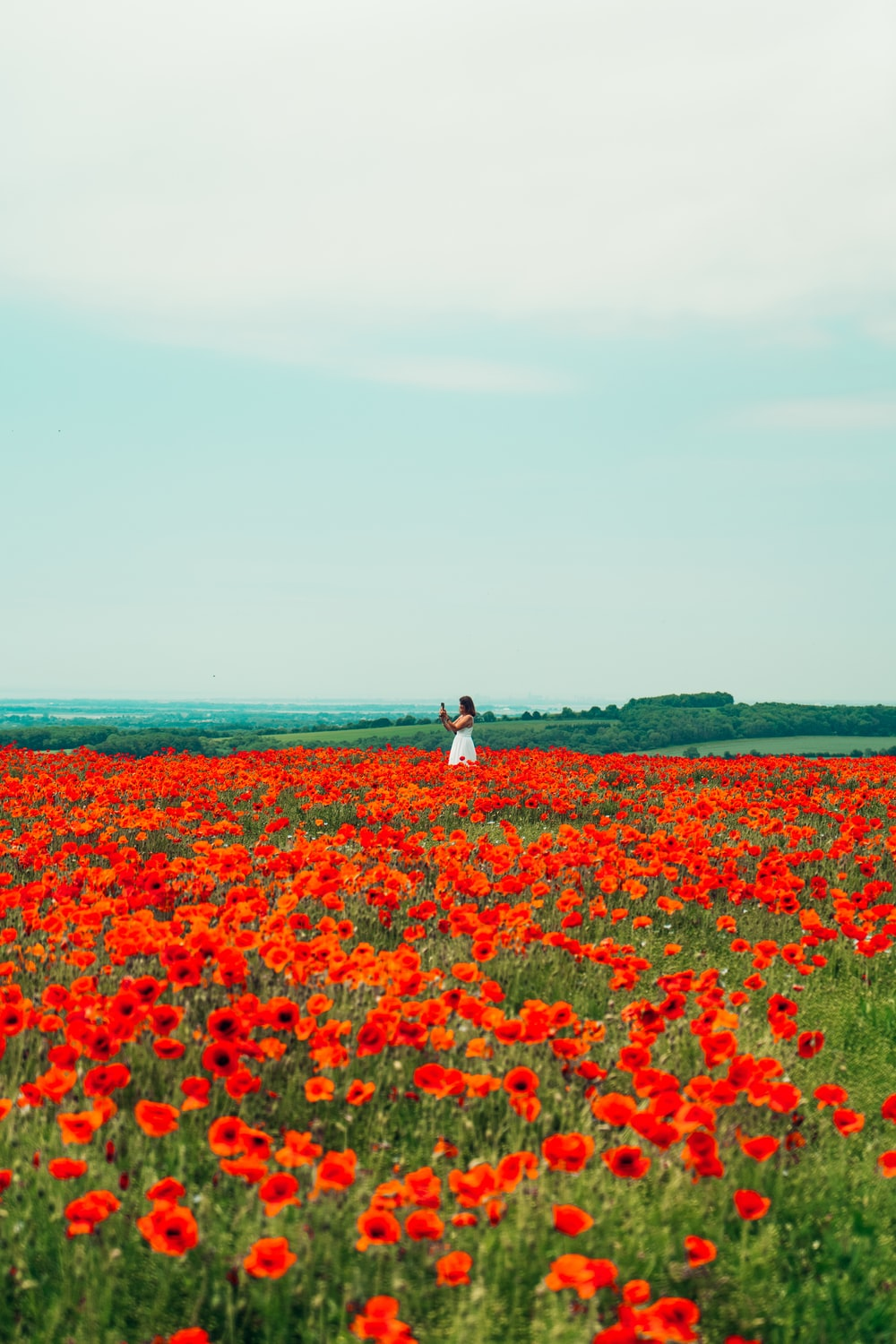 woman in white dress walking on red flower field during daytime