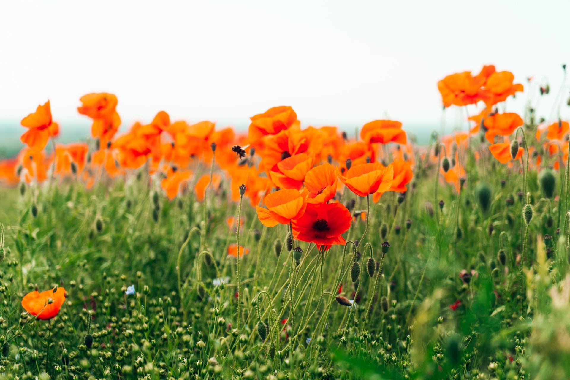 orange flower field during daytime
