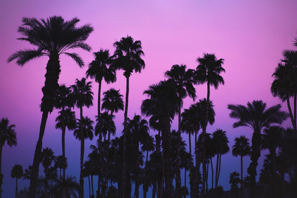 green palm trees under purple sky