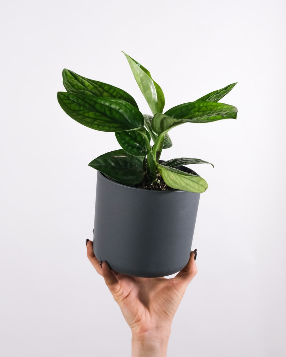 person holding green potted plant