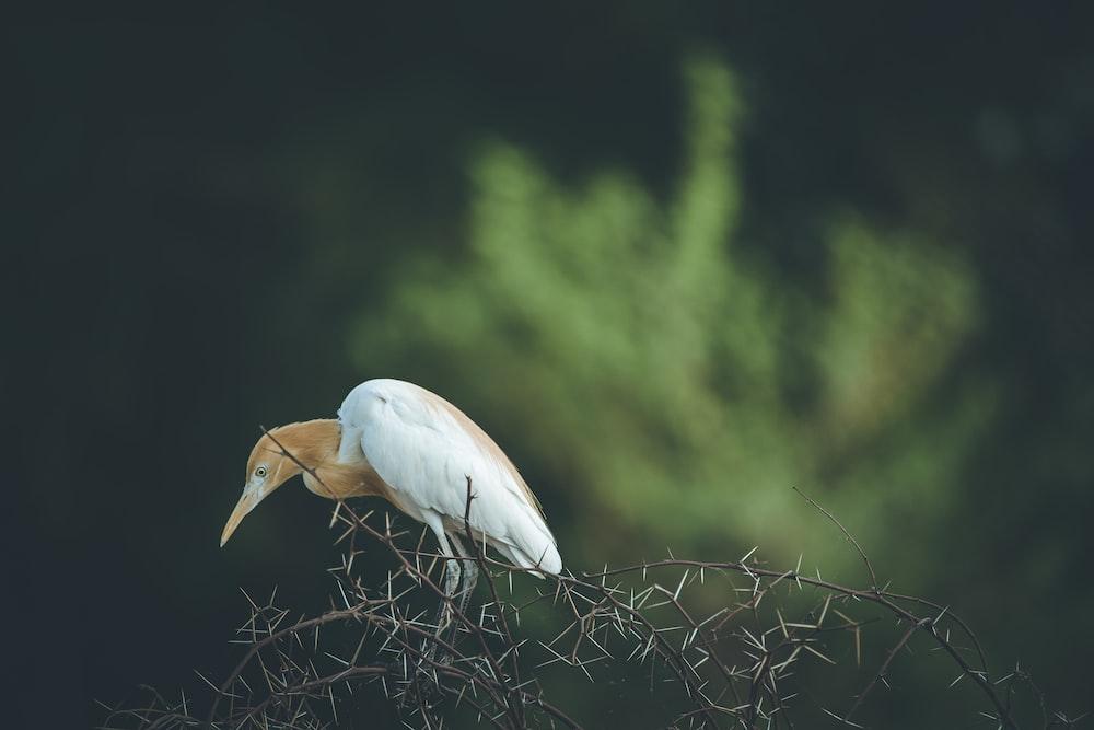 white bird on brown plant during daytime