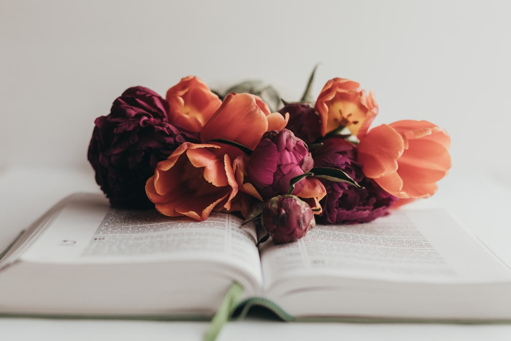 red roses on book page