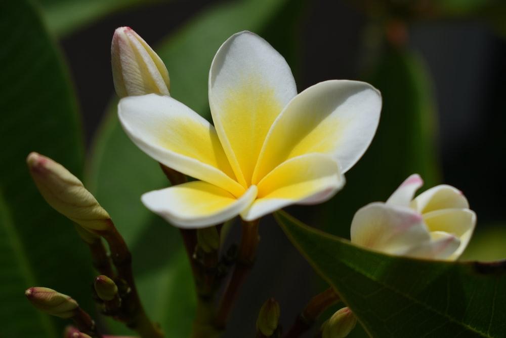 white and yellow flower in macro shot