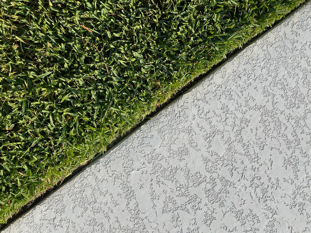 green grass on white concrete wall
