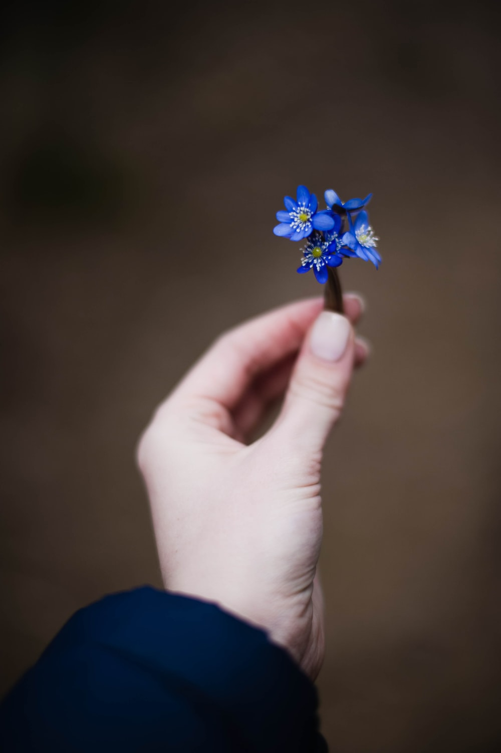 person holding blue flower in close up photography