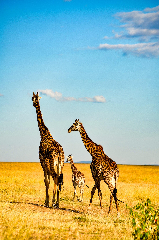 Stunning views of the masai mara reserve in Kenya