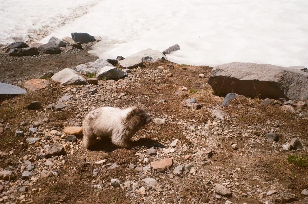 white and brown long coated dog on rocky ground