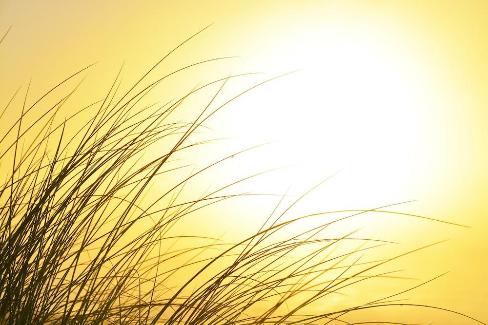 brown grass under white sky