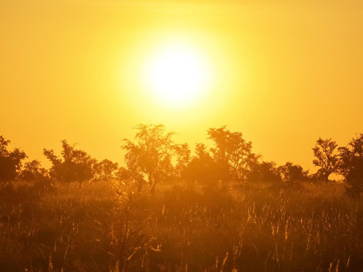 ola de calor en Canadá, brown grass field during sunset