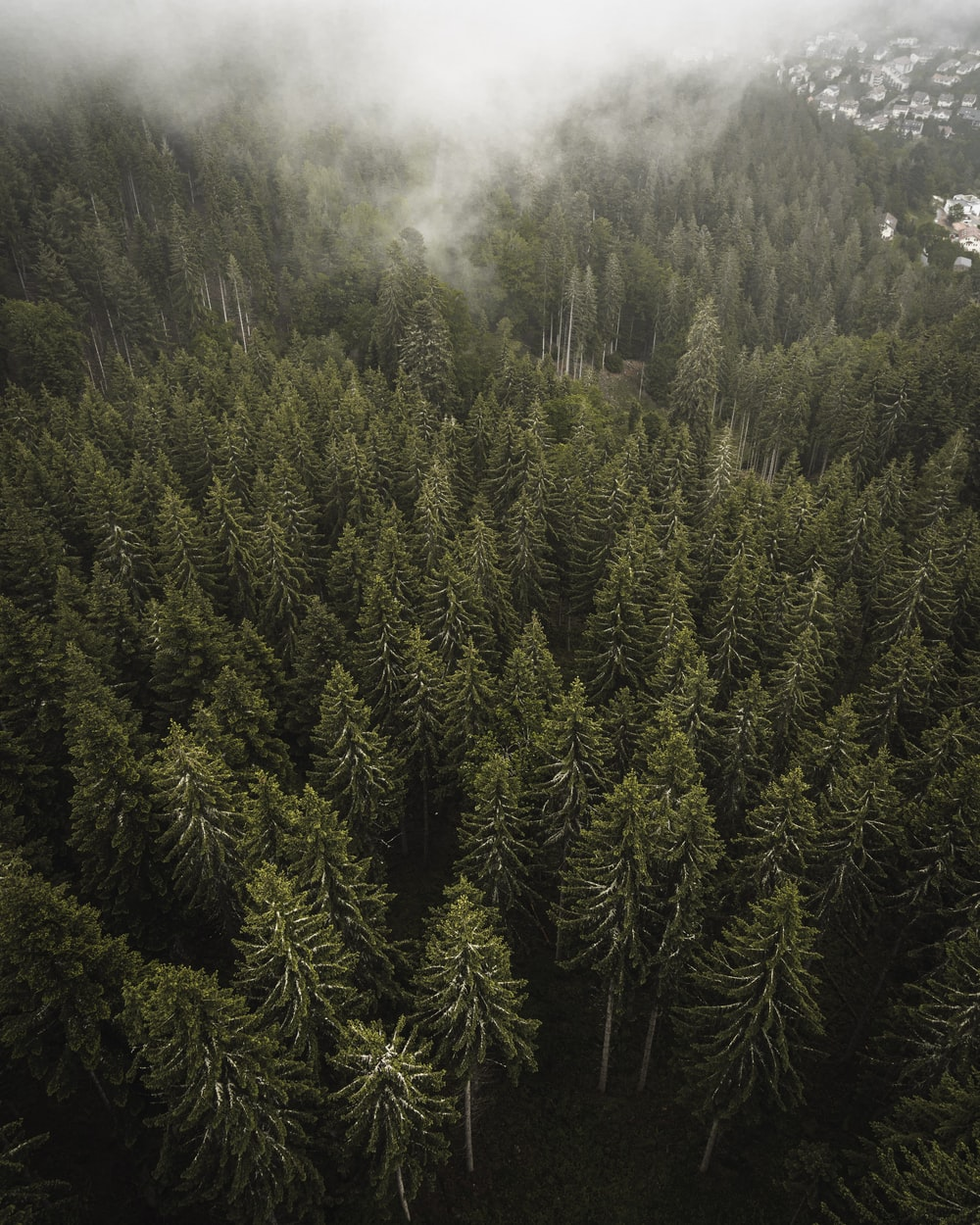 green pine tree on forest during daytime