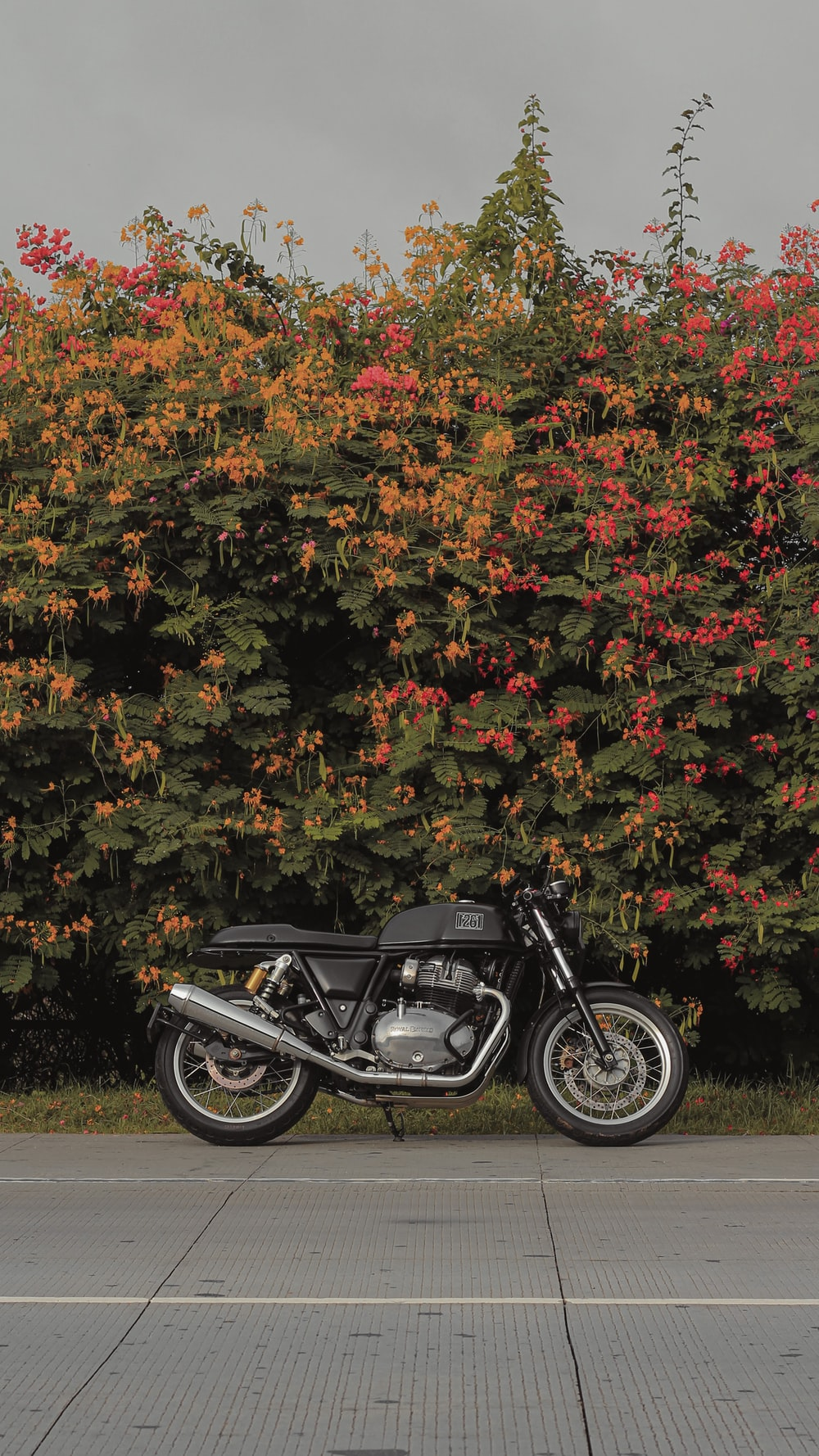 black motorcycle parked beside green and brown leaves