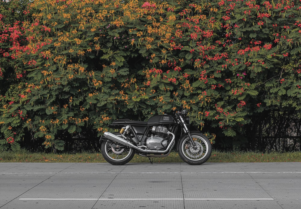 black motorcycle parked beside green and yellow leaves