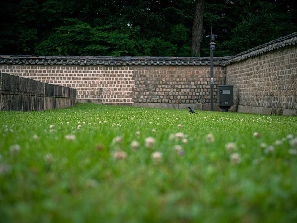 green grass field near brown brick wall