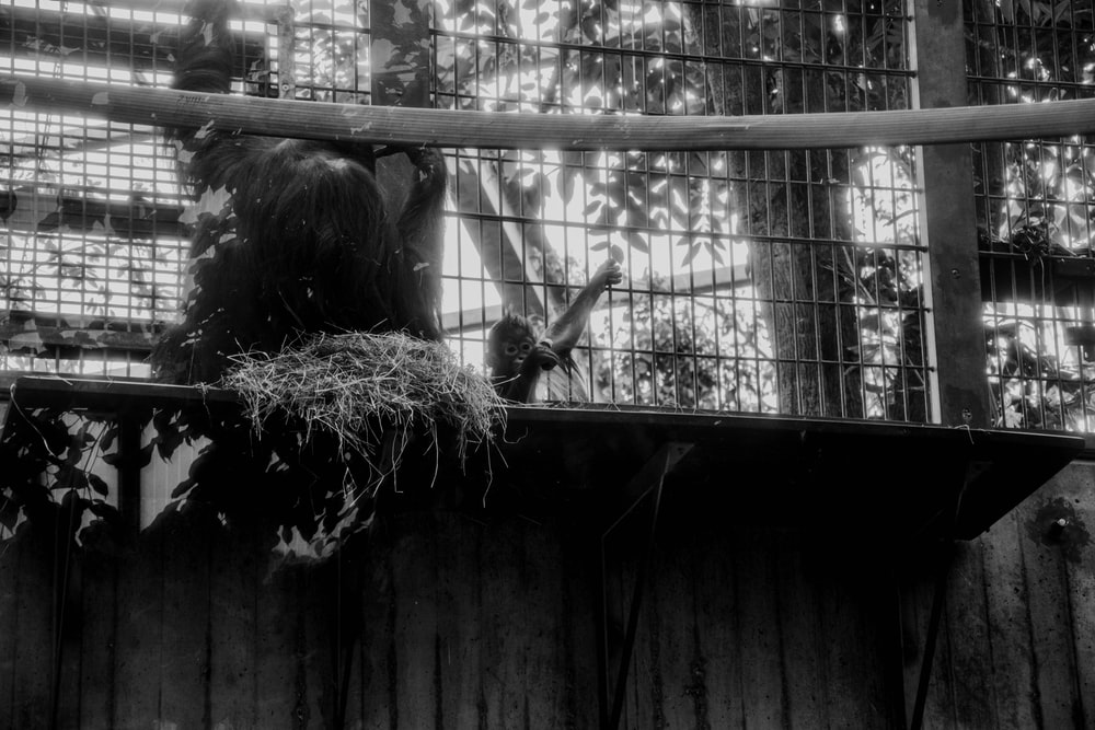grayscale photo of monkey on nest