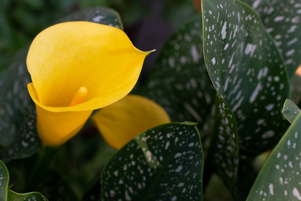 yellow flower with green leaves