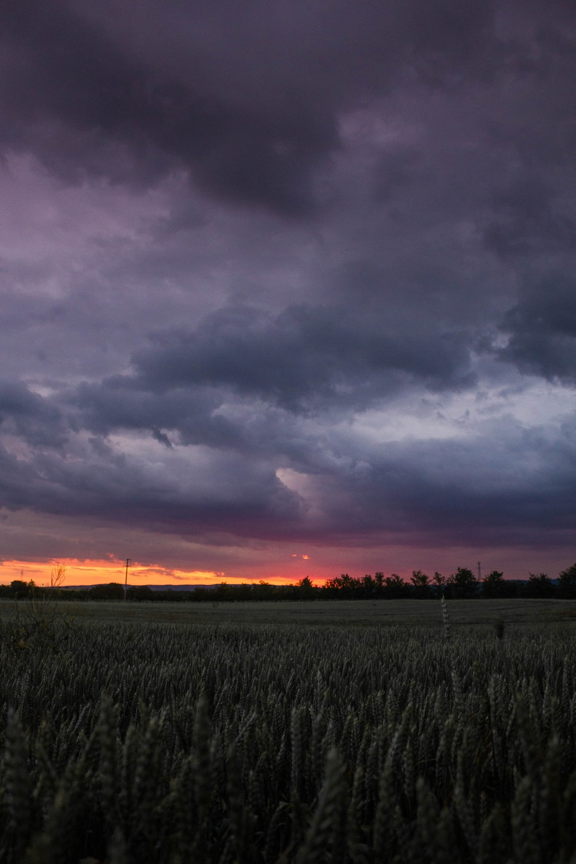 green grass field under gray clouds during sunset