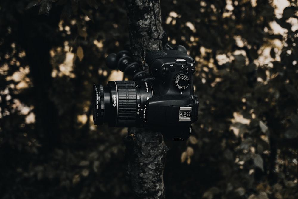 black dslr camera on brown tree trunk