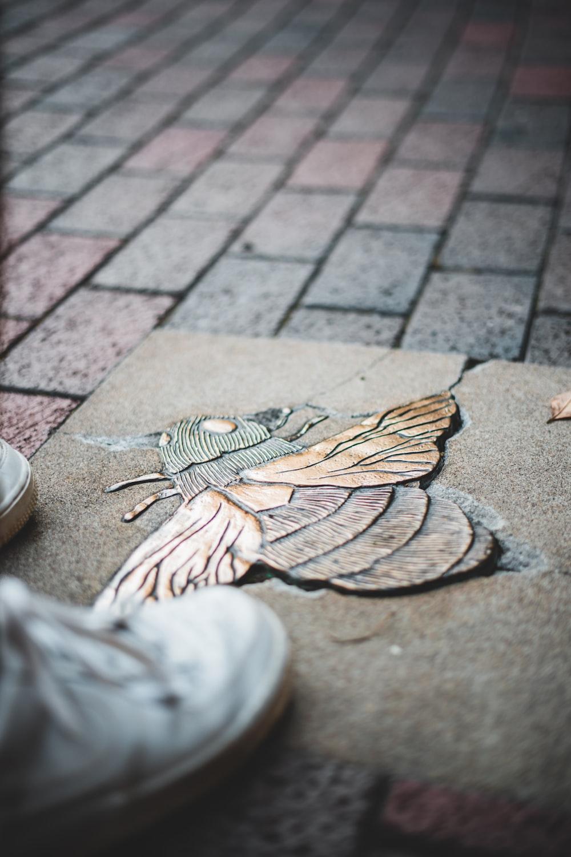 brown and beige bird on brown wooden floor
