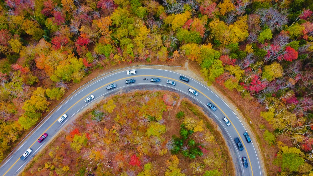 birds eye view of green and yellow trees