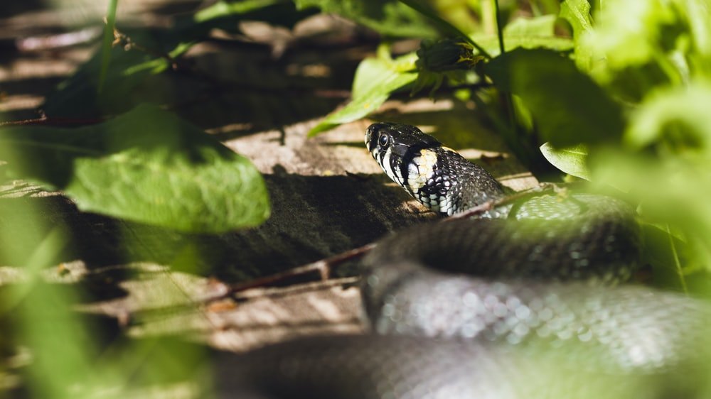 black and white snake on brown tree branch