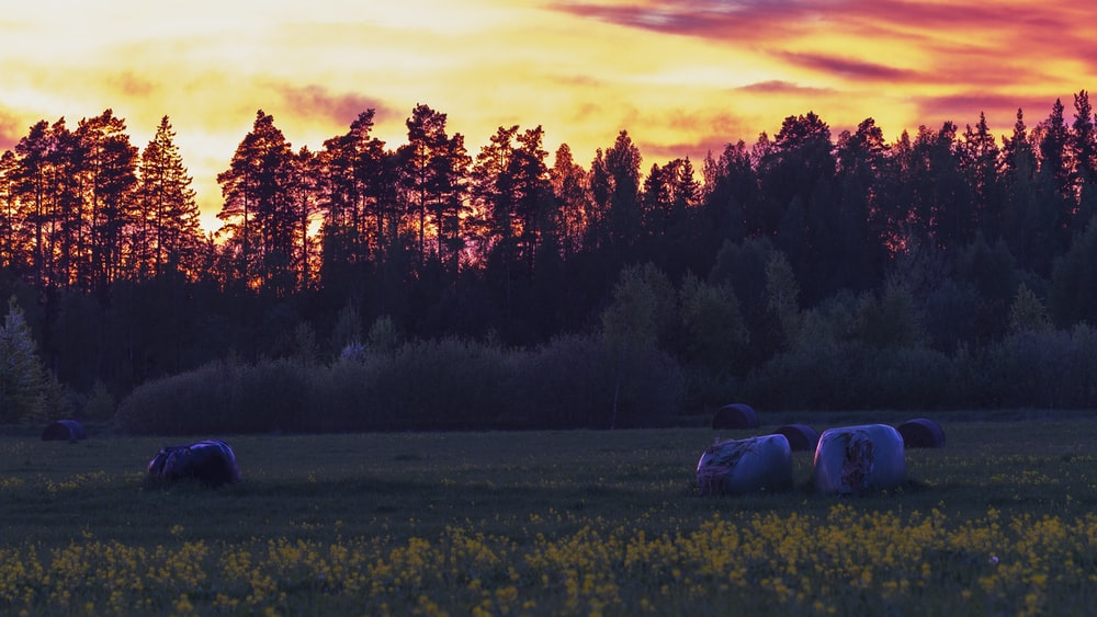 white car on green grass field near trees during sunset