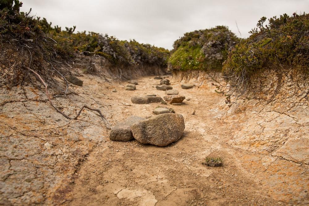 brown rocks on brown soil