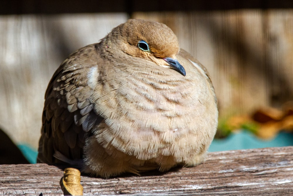 brown and white bird on brown wooden table