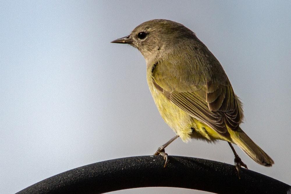 brown bird on black metal fence
