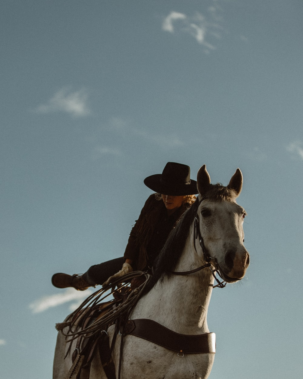 brown and white horse wearing cowboy hat