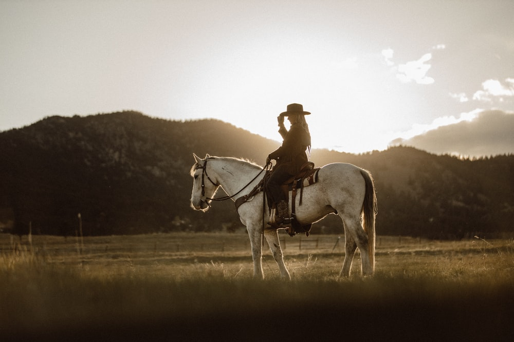 man riding on white horse during daytime