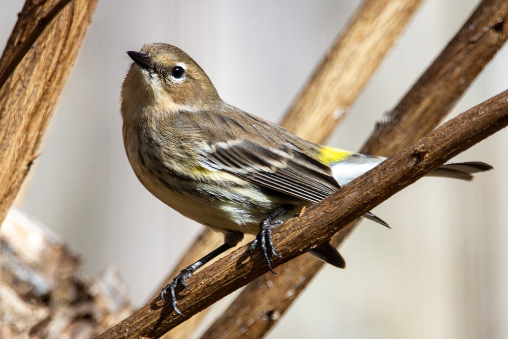 brown and yellow bird on brown tree branch