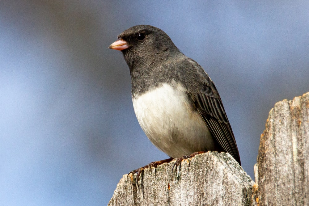 black and white bird on brown wooden post