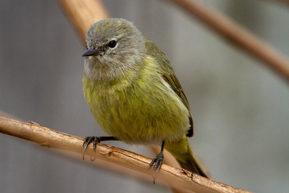green and gray bird on brown tree branch