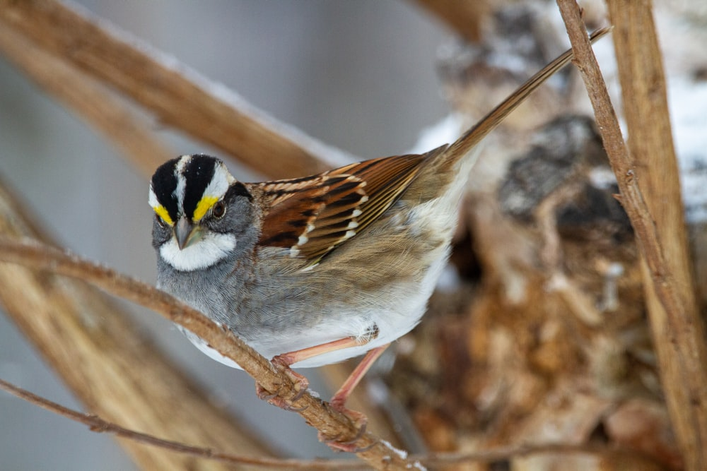 white brown and yellow bird on brown tree branch
