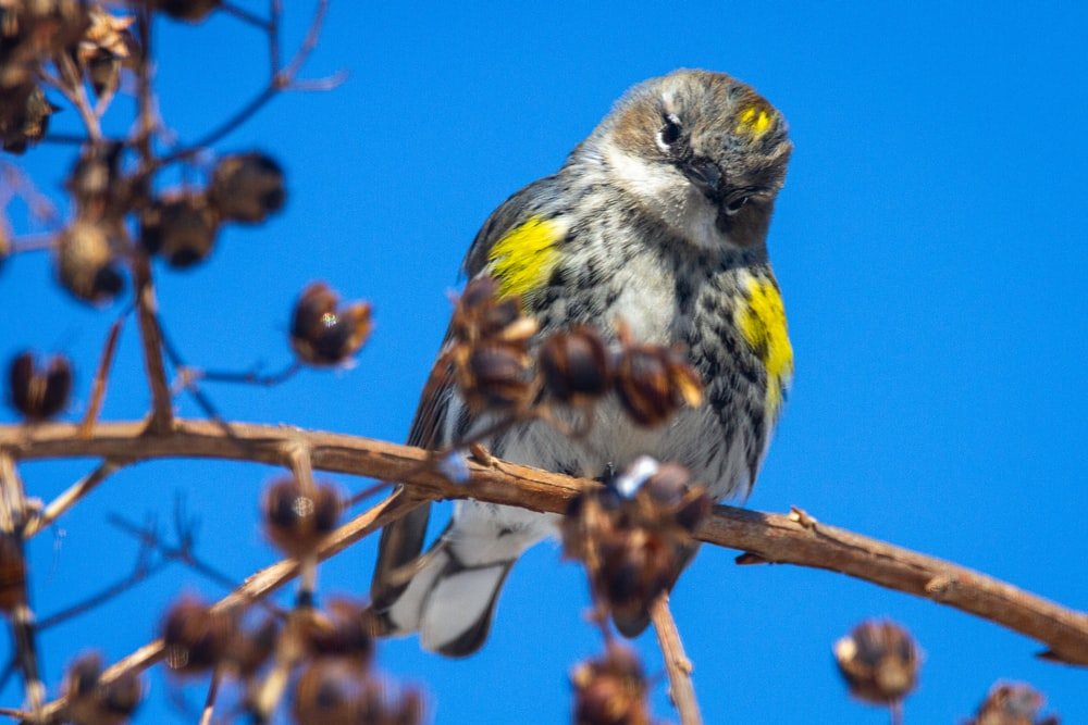yellow and gray bird perched on brown tree branch during daytime