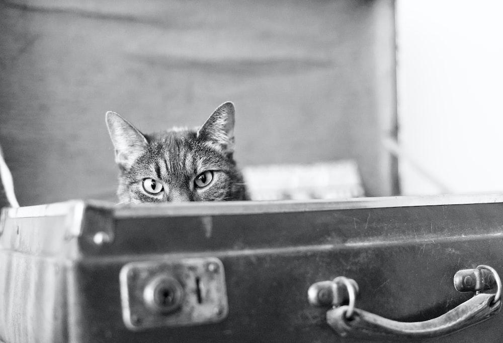 tabby cat in black box