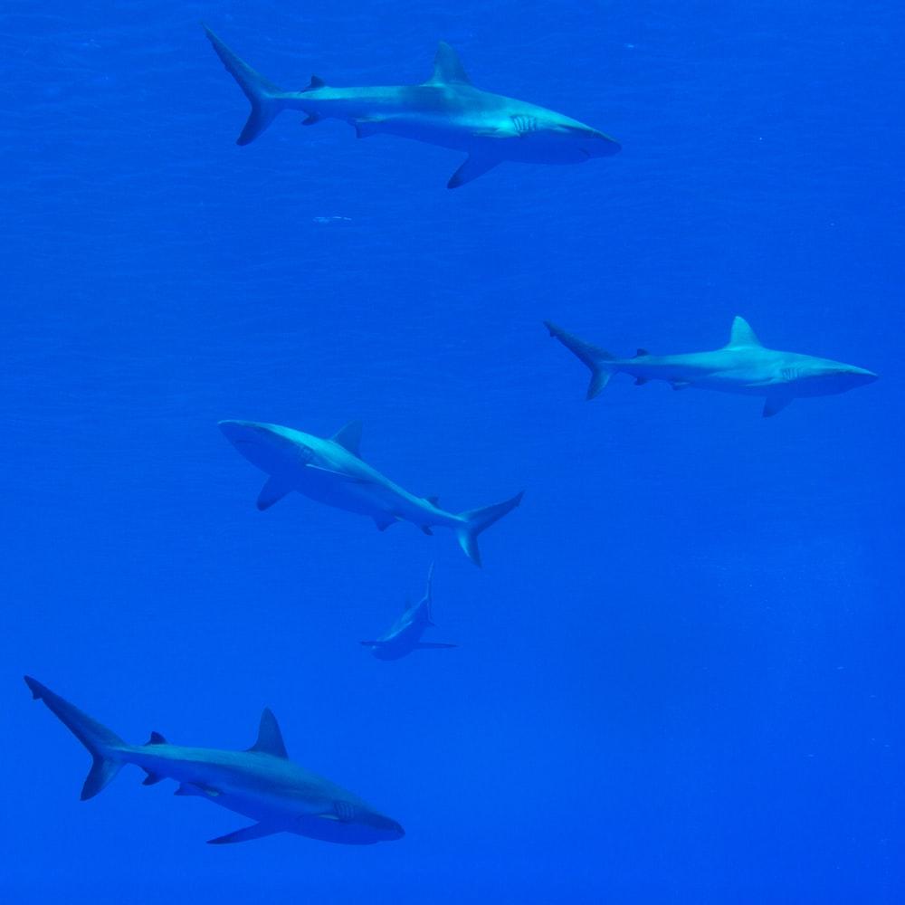 gray shark under the sea