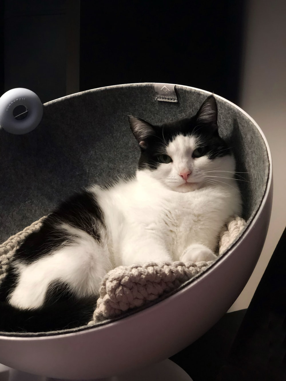 white and black cat in black and white polka dot pet bed