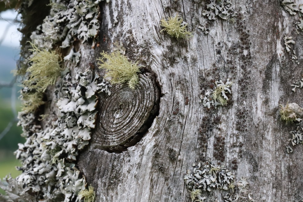 gray tree trunk with green moss
