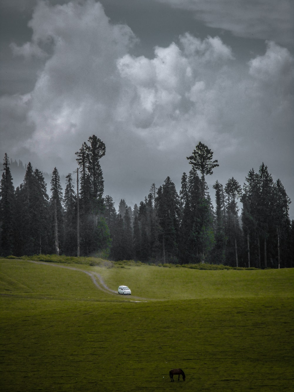 green grass field with trees under gray clouds