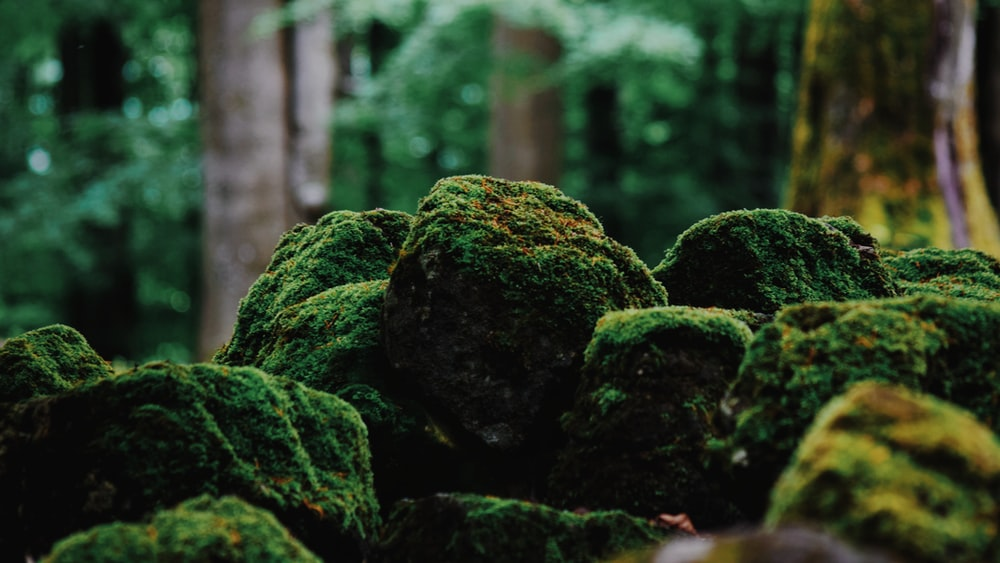 green moss on brown rock