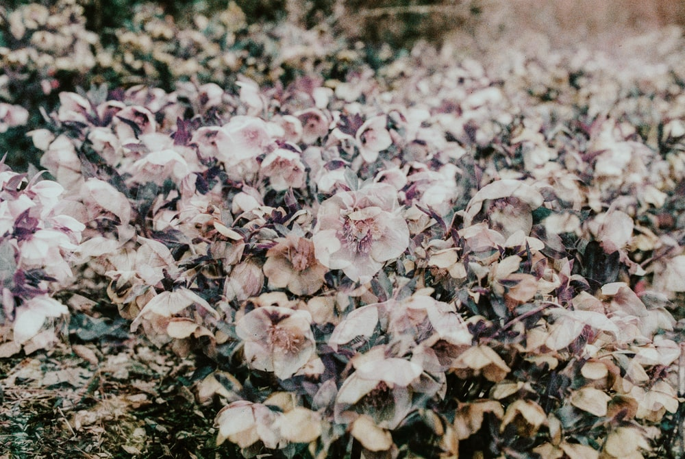 white and pink flowers on ground