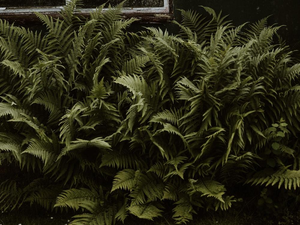 green fern plant near brown wooden window